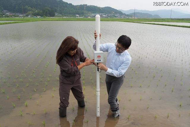 圃場では、実際に水位センサーを立てるデモもおこなわれた。水田により必要な水深は異なるので、1本ずつ設定していく